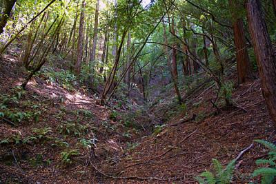 Photograph - Gully On Mt Tamalpais #1 by Ben Upham III
