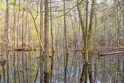 Photograph - Gum Swamp by Victor Culpepper