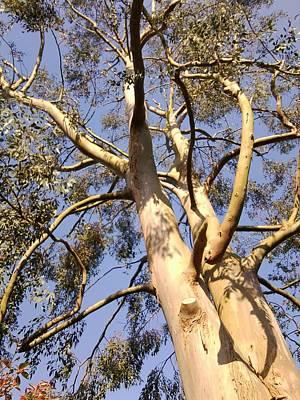Photograph - Gum Tree 1 by Julia Woodman