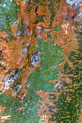 Photograph - Gumbo Limbo Bark by Tom Singleton