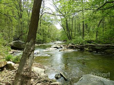 Photograph - Gunpowder Falls - Ncr Trail by Donald C Morgan