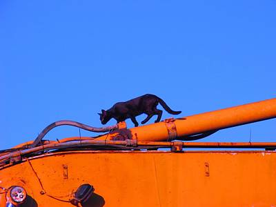 Photograph - Gunther Gets On Top Of Things by Anita Dale Livaditis
