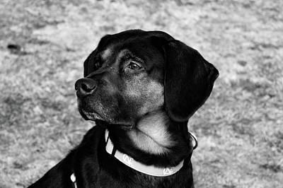Photograph - Gus - Black And White by Nicole Lloyd