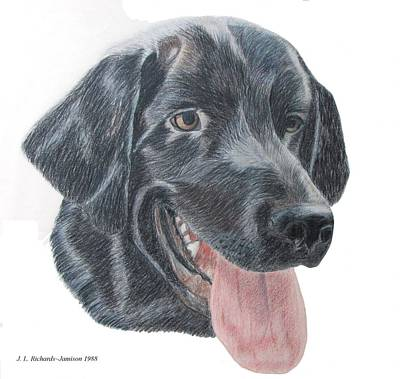 Drawing - Gus by Jennie  Richards