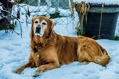 Photograph - Gus Loves The Snow 1545t by Doug Berry