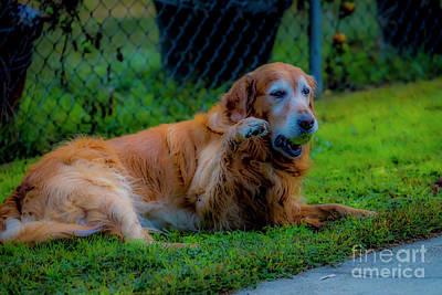 Photograph - Gus Says Hi 5556 by Doug Berry