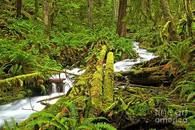 Angeles Forest Photograph - Gushing Through Ferns And Forest by Adam Jewell