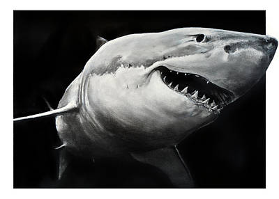 Drawing - Gw Shark by William Underwood