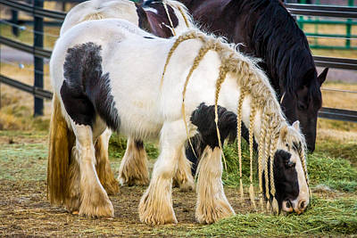 Draft Horses Photograph - Gypsies by TL  Mair
