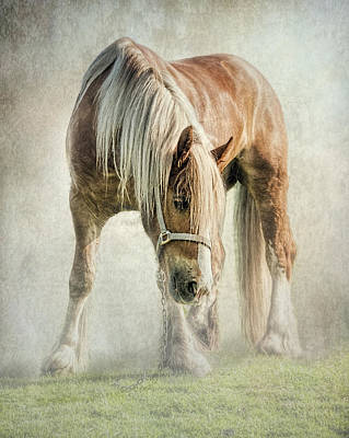 Gypsy In Morning Mist. Art Print