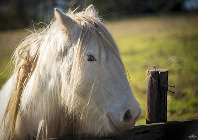 Photograph - Gypsy Pony by Phil Rispin