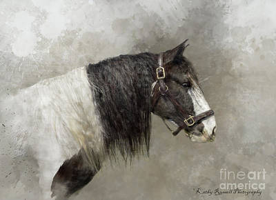 Digital Art - Gypsy Vanner by Kathy Russell
