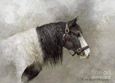 Digital Art - Gypsy Vanner by Kathy Russell