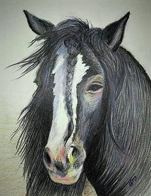 Gypsy Vanner Stallion Original