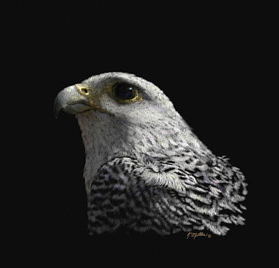 Pastel - Gyrfalcon by Kathie Miller