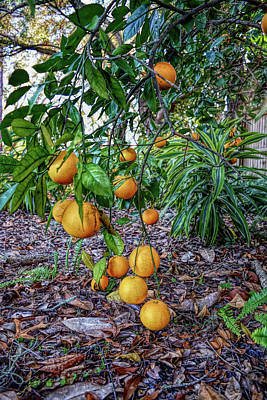 Photograph - H D R Orange Tree by Aimee L Maher ALM GALLERY