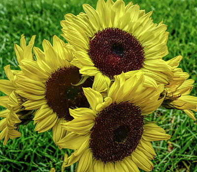 Photograph - H D R Sunflower Bouquet by Aimee L Maher Photography and Art Visit ALMGallerydotcom