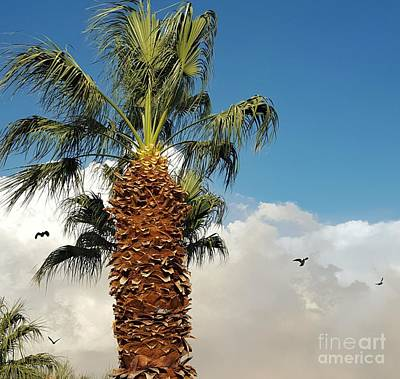 Photograph - Haboob by Angela J Wright