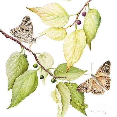 Hackberry Emperor Butterfly Original