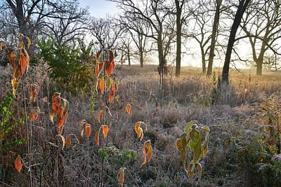 Photograph - Hackmatack National Wildlife Refuge Oak Savannah by Ray Mathis