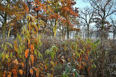 Photograph - Hackmatack Nwr Oak Savannah by Ray Mathis