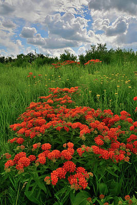 Photograph - Hackmatack Wildlife Refuge Summer Wildflowers by Ray Mathis
