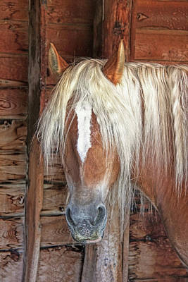 Photograph - Haflinger Draft Horse by Jennie Marie Schell