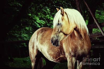 Photograph - Haflinger Horse Equestrian Portrait by Dimitar Hristov