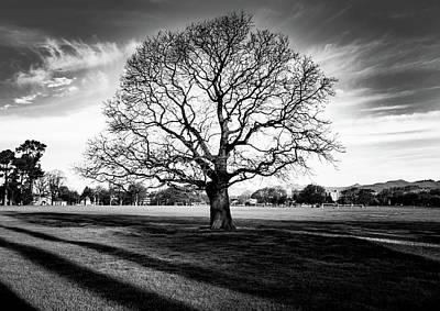 Photograph - Hagley Tree Landscape by Roseanne Jones