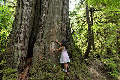 Haida Gwaii Photograph - Haida Forest by Christian Heeb