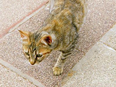 Photograph - Haifa Cat by Donna Munro