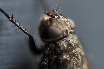 Photograph - Hair On A Fly by Glenn Gordon