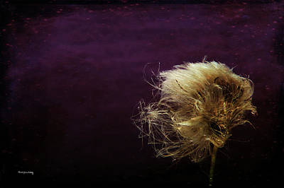 Photograph - Hairy Do by Randi Grace Nilsberg