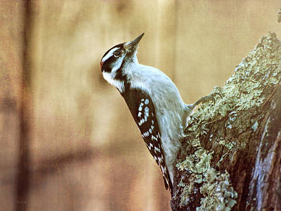 Woodpecker Wall Art - Photograph - Hairy Woodpecker by Bob Orsillo