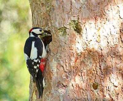 Photograph - Hairy Woodpecker by Elenarts - Elena Duvernay photo