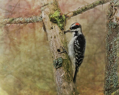 Woodpecker Wall Art - Photograph - Hairy Woodpecker On Old Tree by Susan Capuano
