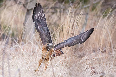 Photograph - Hal Picking Up Dinner by Brian Hale
