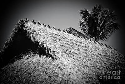 Photograph - Hale Mauu Lahaina Maui Hawaii Black And White by Sharon Mau