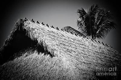 Photograph - Hale Mauu Lahaina Maui Hawaii Black And White by Sharon Mau