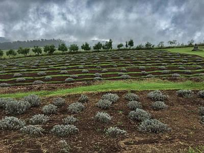 Photograph - Haleakala Mists by Frank DiMarco