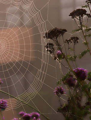 Photograph - Half A Web by Gary Karlsen