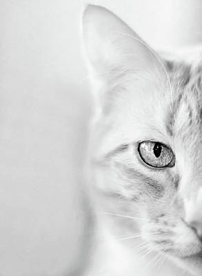 Photograph - Half Cat by Sue Collura