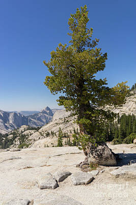 Photograph - Half Dome And Yosemite Valley From Olmsted Point Tioga Pass Yosemite California Dsc04270 by Wingsdomain Art and Photography