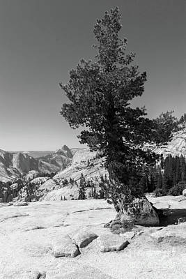 Photograph - Half Dome And Yosemite Valley From Olmsted Point Tioga Pass Yosemite California Dsc04270bw by Wingsdomain Art and Photography