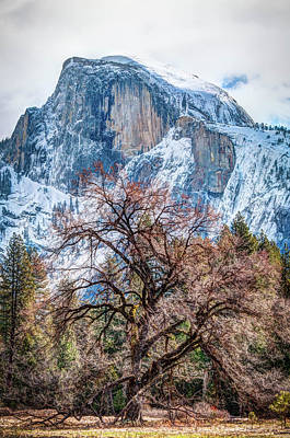 Photograph - Half Dome Meadow Tree Winter by Connie Cooper-Edwards