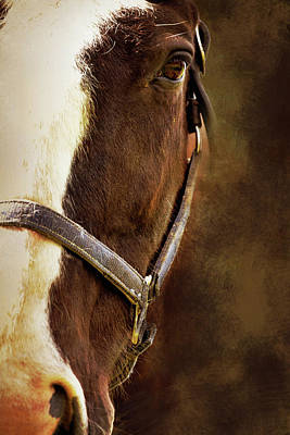 Profile Digital Art - Half Face Horse Portrait by Mihaela Pater
