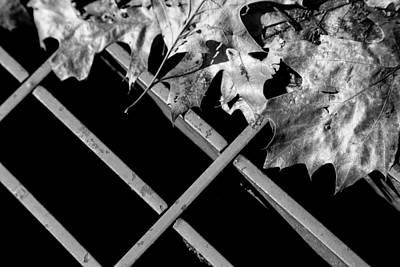 Photograph - Half Gone by Karol Livote
