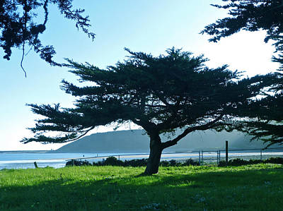 Photograph - Half Moon Bay Cypress by K L Kingston