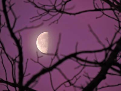 Half-moon In Sunrise Lavender Art Print by Jamie K Reaser
