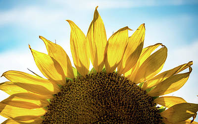 Photograph - Half Sunflower by Anthony Doudt